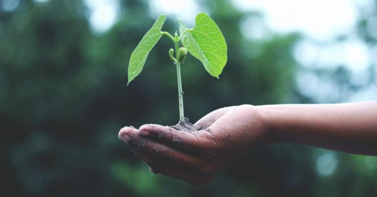 Sarà una vera transizione ecologica?